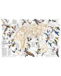 Migrazioni degli Uccelli -...