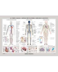 Il Corpo Umano - Sistema...